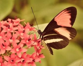 Beautiful Butterfly - 8x10 photograph - fine art print - nature - nursery art - tropical butterfly