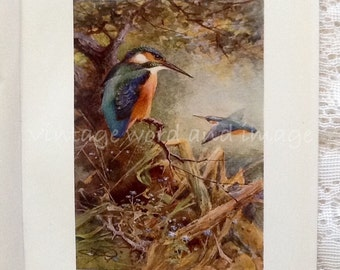 Common Kingfisher Art Print Antique Engraving Book Plate Vintage Color Lithograph Watercolor Whymper Bird Ornithology Home Wall Decor