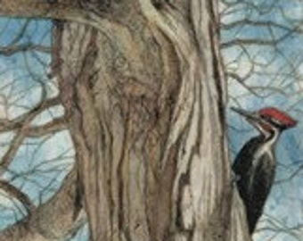Pileated Woodpecker Matted/Signed Giclee  Print