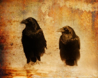 Two Crows: Mixed Media Photography