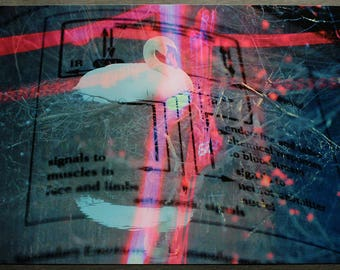 "Original fine art photographic print - ""Homeostatic Repose"" 11''x17'' - Cybernetics, Nature, Swan"