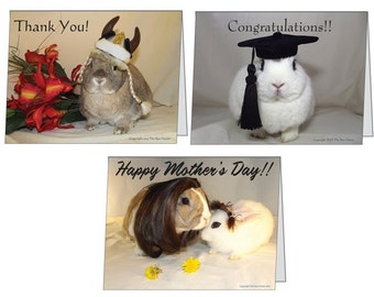 This is a pack of 3 Greeting Cards.
