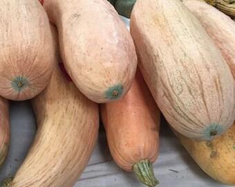 Pink Banana Squash - non-GMO, not treated, organic - 15 seeds