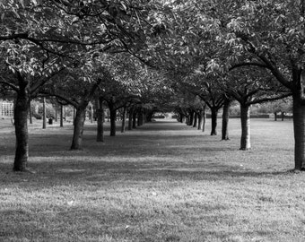 Black and White Trees in Brooklyn Botanical Gardens Fine Art Photo Print, Inspiring Nature Photography
