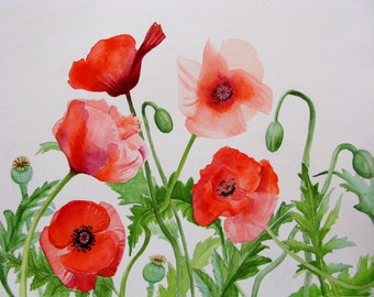 Red Poppies poppy flowers botanical poppies watercolor poppy prints poppy paintings