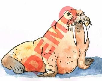 Walrus Watercolor Digital Art