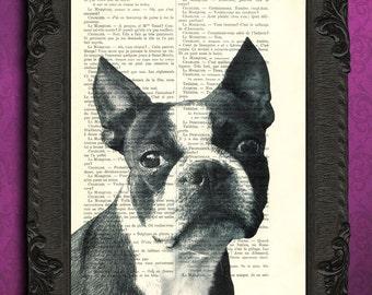 boston terrier print black and white boston terrier portrait