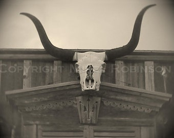 Cow Steer Skull. Horns. Original Digital Photograph Art Print. Black and White. Wall Art. Wall Decor. 4 MILE STEER by Mikel Robinson