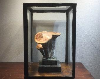 Fine Mushroom Model, 30s, Cabinet of curiosities, Natural History