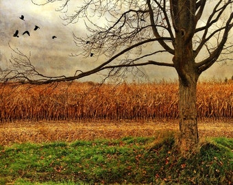 tree photo, country photo, thanksgiving decor, landscape, harvest, farm corn, autumn, texture yellow, orange, rustic cottage decor, wall art