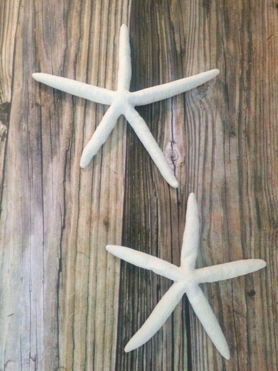 Starfish Wall Decor Starfish Wall Hangings Large Starfish