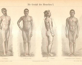 1894 Anatomy of Human Body Shapes and Muscles - Males Original Antique Engraving