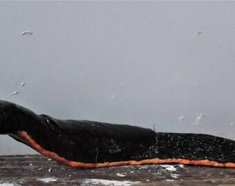 Red, black slug, Arion sp.