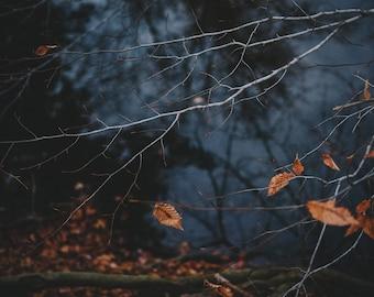 16x 20 Print 'The Last Leaves of Fall' // © Meg Van Kampen Studios