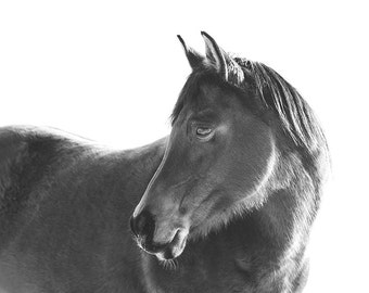 Black Horse with White Background Photograph | Modern Horse Art | Physical Print