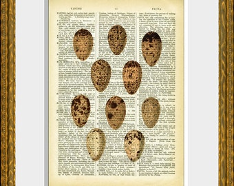 EGGS 06 - old book page art print - upcycled antique dictionary page with an antique egg illustration - vintage home decor - kitchen art