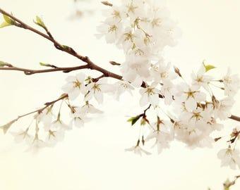 Cherry Blossoms, Nature Photography, White Wall Art, Neutral Print - Floral Photograph, Nursery Decor, Girls Room Walls, Sakura Art Prints