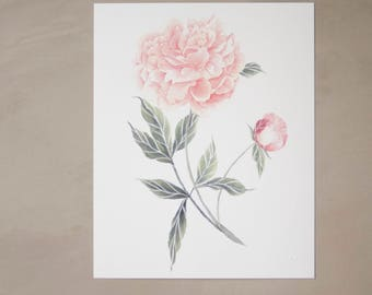 "Peony Watercolor Artprint 8""x10"""