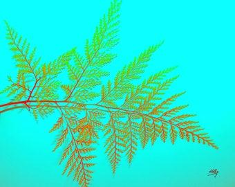 Fern leaf on Aqua Background