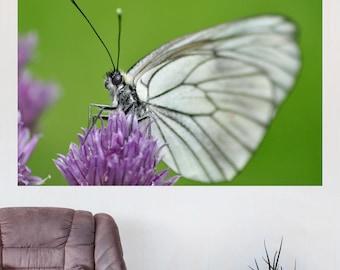 Butterfly Photography, Digital Print, Spring Butterfly Photo, Nature Photography, Macro Photography, Wall Art, Home Decor, Estonia, Digital