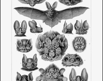 BATS ~ Haeckel drawings of bats ~ Vintage Wildlife ~ Vampire Art ~ Bat Poster ~ Halloween Art ~ Chiroptera Poster wall art ~ Bat Chart