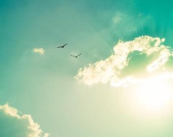 bird photography birds in flight 8x10 8x12 summer sunset golden teal art print mint green aqua beach green abstract sun clouds sky seagull