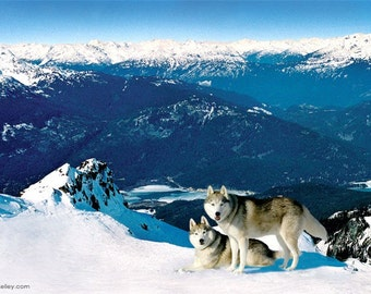 Whistler Mountain Peak and Huskies - Dogs Photography 6X8.5 on 8x10  Professional Photojournalist shanekelley