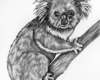 Original Pencil Drawing - Koala 3