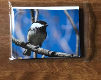 Bird Note Cards, Chickadee note cards, single-sided blank note cards, greeting cards, post cards, 8 photographic note cards, stationery