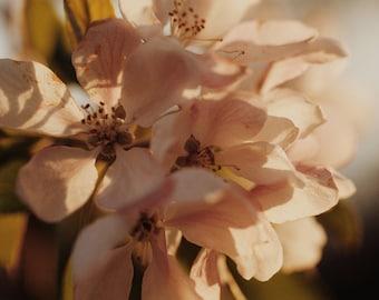 Blossom Flower Print