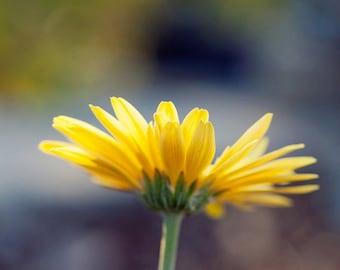 flower photography, yellow daisy, nature photograph, bokeh, gerber daisy, yellow home decor, yellow wall art, nursery decor