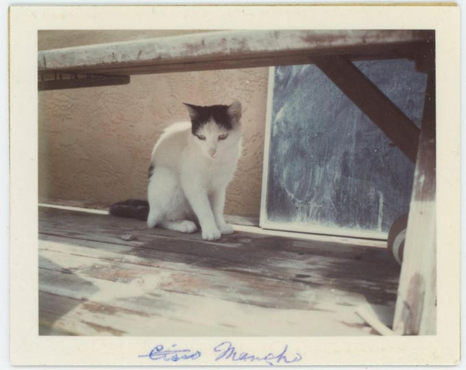 Vintage Polaroid Snapshot Photo: Cisco the Cat, c1960s-70s (127625)