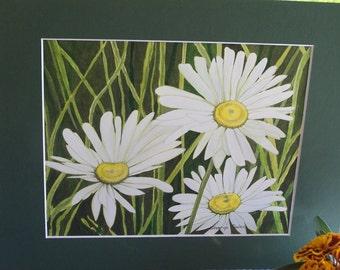 "Watercolour original ""White Daisies"""