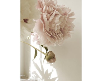 Peony Art, Peony Photograph, Shabby Chic Wall Art,  Pink  Pastel Decor, French Country Home, Flower Photography, Neutral Wall Art