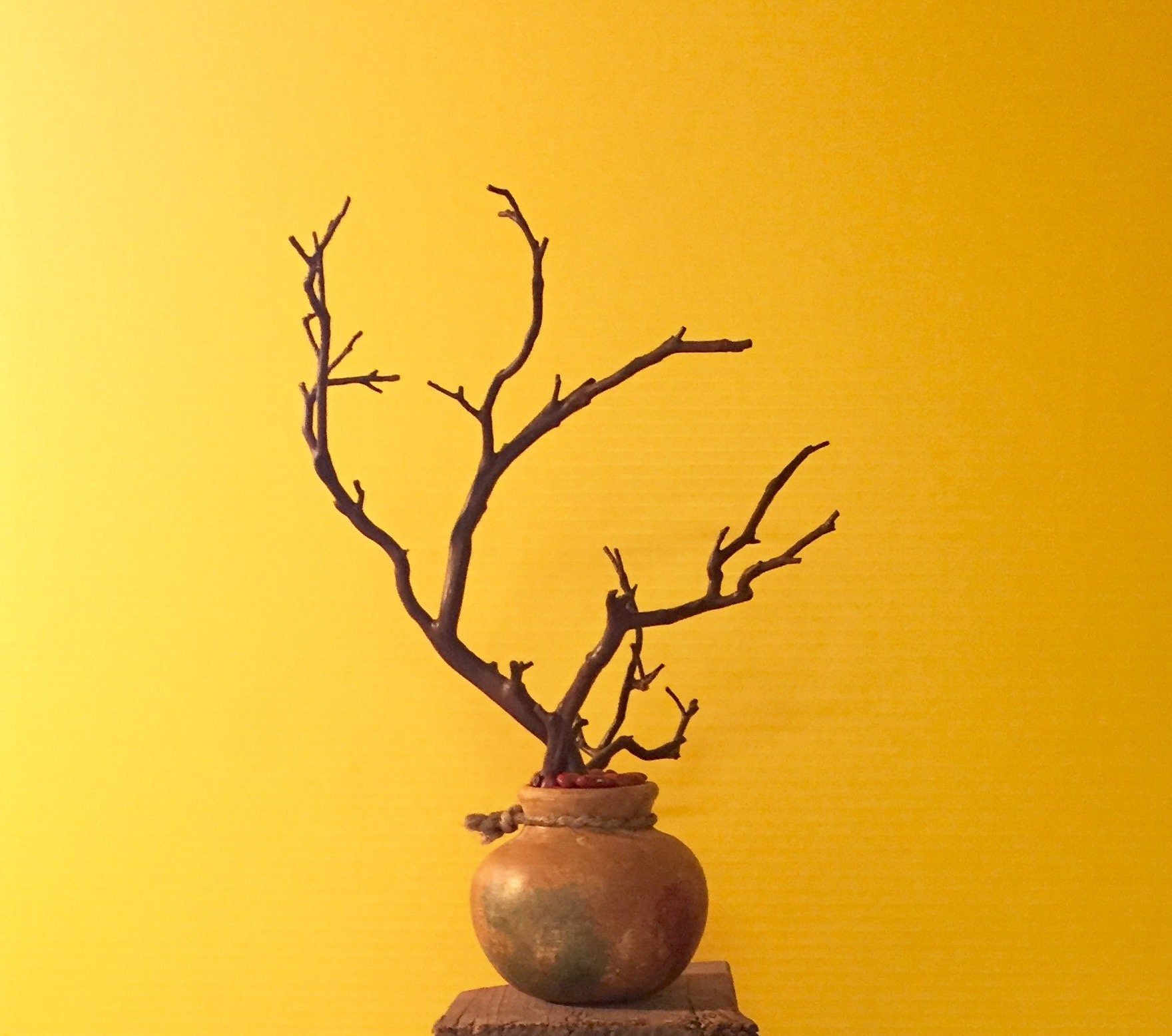 Small Manzanita in Southwestern Clay pot Housewarming gift
