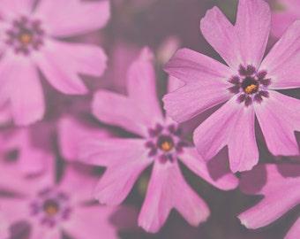 Creeping Phlox Color Photo Print { purple, sunshine, sunlight, flower, ground, yellow, wall art, macro, nature & fine art photography }