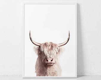Highland Cow Print, Cow Poster, Cattle  Photography, Animal Portrait, Cow Closeup, Farm Nursery, Farm Animal Wall Art, Digital Print.