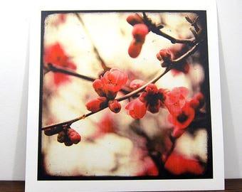 Floraison Rouge - Tirage expo 30x30cm - Signé et Numéroté