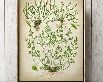 Fern Moss Poster, Fern print, Moss Print, Fern Art, Botanical Art, Botanical Print, Botanical Chart, Botanical Poster, Green Plants