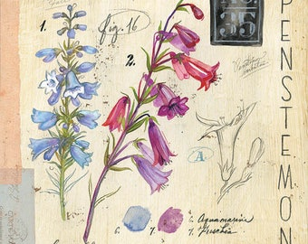 Penstemon Print, Botanical Print, Botanical Illustration, Floral Print, Floral Illustration