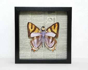 Shadow box Art Doll  - Butterfly with Watercolor Wings, 3D Wall Art, 10x10, Original Mixed Media, Hinged Doll Man with Wings