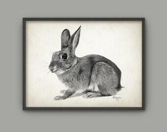 Rabbit Art Print from an Original Drawing - Rabbit Wall Art - Woodland Art - Nature - Biology Gift Idea - Baby Rabbit Giclee Art Print AB441