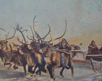 Rare Soviet 1950s postcard, Deer postcard, Races on deer sledges, Deer art, Postcard, Unused postcard, Printed in USSR, 1950s