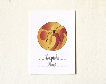 Kitchen Art Spring Fruits Peach - 5x7  Print Food illustration - yellow red orange gift for her French botanical chart minimalist Retro