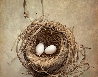Bird Nest Photograph, Eggs, Nest, Baby Birds, Nature Art, Shabby Chic, Rustic Print, Nursery Wall Art, Beige, Brown - The White Dove's Eggs