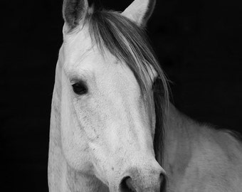 Horse Photography Black and White Horse Art Canvas
