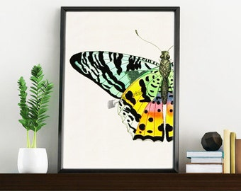 Wall art print Butterfly detail butterfly collage print Nature collection wall art print Gift her Nursery art BFL102WA4