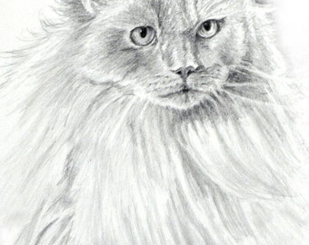 Ragdoll Cat Art Print, Ragdoll Cat, Ragdoll Cat B/W Print, Ragdoll Cat Pencil Art, Cat Drawing, Cat Pencil Drawing by P. Tarlow