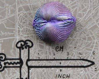Large single shell