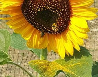 Mega Mix Sunflower Seeds 150